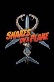 Snakes on a Plane (2006) เลื้อยฉก เที่ยวบินระทึก