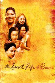 The Secret Life of Bees (2008) สูตรรักรสน้ำผึ้ง