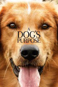 A Dogs Purpose (2017) หมา เป้าหมาย และเด็กชายของผม
