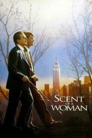 Scent of a Woman (1992) ผู้ชายหัวใจไม่ปอกเปลือก