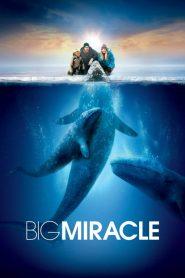 Big Miracle (2012) ปาฏิหาริย์วาฬสีเทา