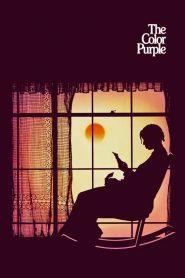 [NETFLIX] The Color Purple (1985) เลือดสีม่วง