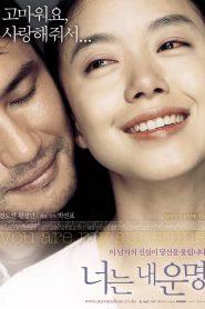 [NETFLIX] You Are My Sunshine (2005) เธอเป็นดั่งแสงตะวัน