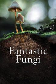[NETFLIX] Fantastic Fungi (2019) เห็ดมหัศจรรย์
